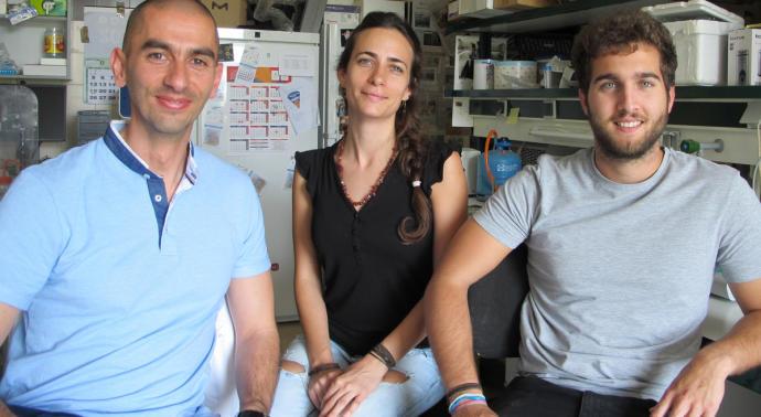 Científicos de Salamanca descubren en un escarabajo una nueva bacteria con potencial biosanitario